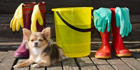 How to Choose Pet-Safe Cleaning Supplies, Somerset, Kentucky