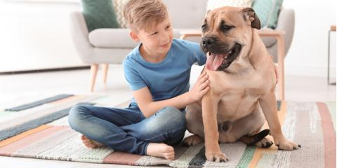3 Ways to Protect Hardwood Floors From Dogs, Westport, Connecticut