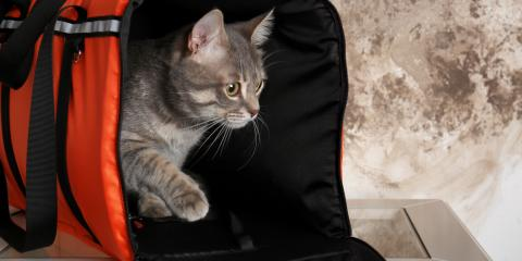 How to Get Your Cat Into a Carrier, Newport-Fort Thomas, Kentucky