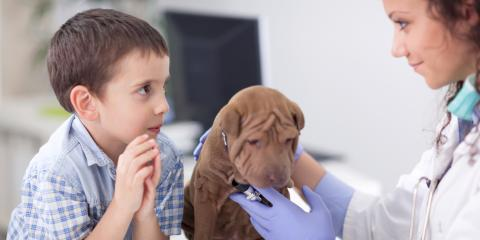 A Guide to Pet Vaccines , Newport-Fort Thomas, Kentucky
