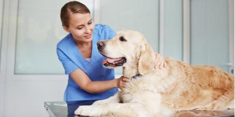 How to Make Your Dog's Vet Hospital Visits a Positive Experience, Southgate, Kentucky
