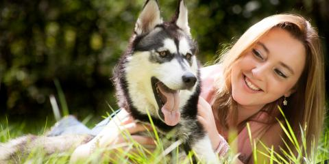 Why Pet Dental Care Is Essential, Newport-Fort Thomas, Kentucky