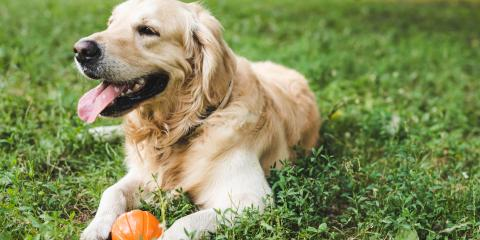 How to Protect Your Yard From Dog-Related Damage, Newport-Fort Thomas, Kentucky