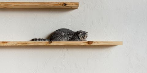 Why Cats Like High Places, Newport-Fort Thomas, Kentucky