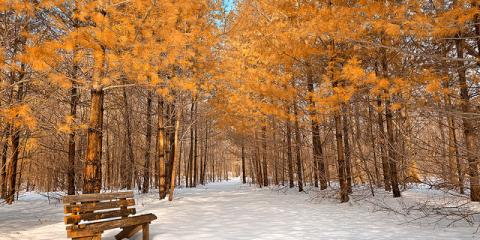 4 Tips to Prepare Your Trees For Winter With Southwestern Ohio Tree Service, Loveland, Ohio