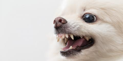 Been the Victim of a Dog Bite? 3 Reasons to Hire an Accident & Personal Injury Attorney, Sparta, Wisconsin