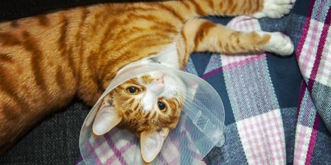 The Benefits of Spaying & Neutering Animals, Amsterdam, Virginia