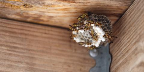 When Should You Have a Professional Exterminator Remove Stinging Insects?, Ogden, New York