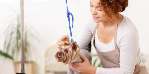Top 4 Tips for Choosing a Pet Grooming Salon, Ogden, New York