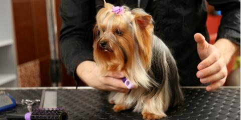 What Is Included With Professional Dog Grooming?, Ogden, New York
