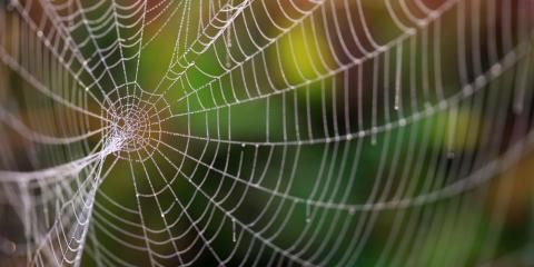 Everything You Should Know About Spider Control, Port Orchard, Washington