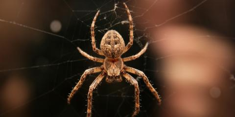 2 Common Las Vegas Spiders & How Surefire Pest Control Can Help, Las Vegas, Nevada