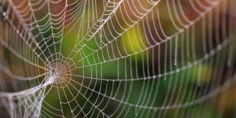 3 Urgent Signs of a Spider Infestation That Requires an Exterminator, Rochester, New York