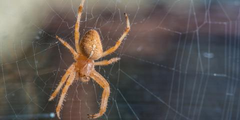Do's & Don'ts for Handling Spiders in the Home, 4, Tennessee