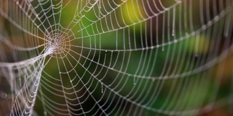 Spider Extermination: 3 Tips for Keeping the Arachnids Out of Your Home, Las Vegas, Nevada