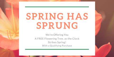Spring Has Sprung *FREE Flowering Tree!, New Baltimore, Michigan