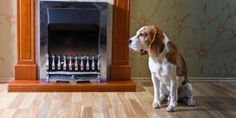5 Ways to Avoid Scratches From Your Dog on Hardwood Flooring, Springfield, Massachusetts
