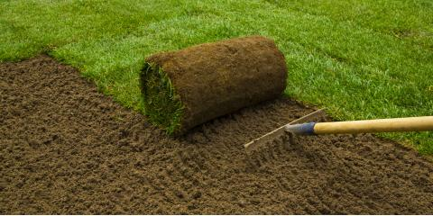 How Frequently Should New Sod Be Watered?, ,