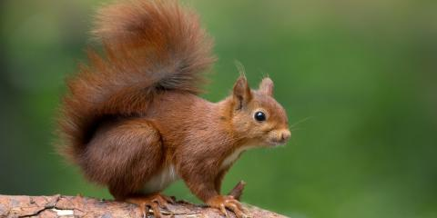 3 Ways Squirrels Can Damage Your Property, Ogden, New York