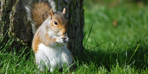 Boot Critters Out of Your Home With These 3 Squirrel Removal Tips, Miami, Ohio