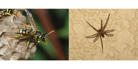 Stay Pest-Free This Spring: Call on Lexington's Pest Management Professionals for your Spring pest problems. , Lexington-Fayette, Kentucky