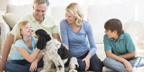 How to Incorporate Pets Into a Fire Evacuation Plan, St. Augustine, Florida