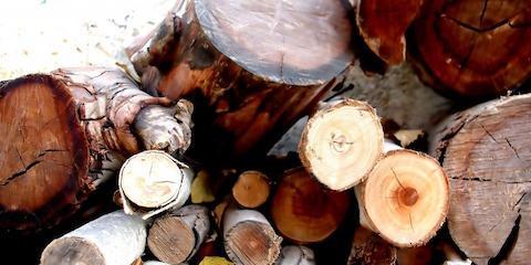 Unseasoned vs. Seasoned Firewood: 4 Key Differences, Perryville, Missouri