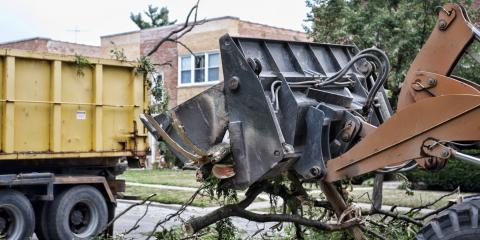 3 Tips to Prepare for Tree Removal, St. Louis, Missouri