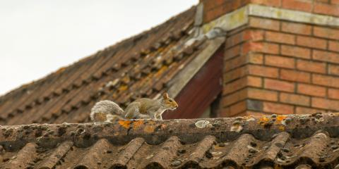 3 Tips to Prevent Squirrel Infestations, St. Louis, Missouri