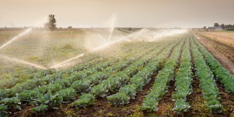 4 Tips for Designing an Irrigation System, St. Paul, Oregon