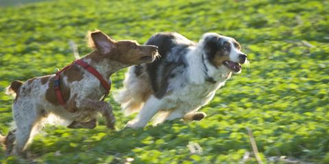 5 Tips to Choose the Right Pet Day Care Facility, Defiance, Missouri