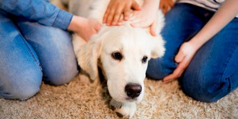 4 Tips for Getting Pet Urine Out of Your Carpet, Branson, Missouri
