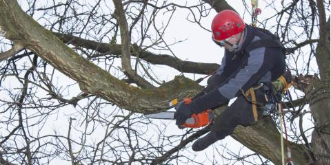 3 Important Things to Know About Arborists, Stamford, Connecticut