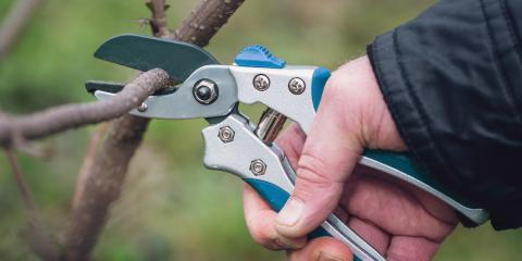 5 Essential Pieces of Tree Pruning Equipment, Stamford, Connecticut