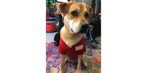 Call for an insurance quote today and State Farm will donate $10 towards ending pet homelessness!, Stratford, Connecticut