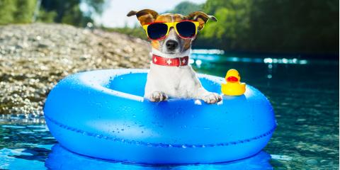 A Local Veterinarian Shares Tips for Keeping Your Pet Cool During the Summer, Statesboro, Georgia