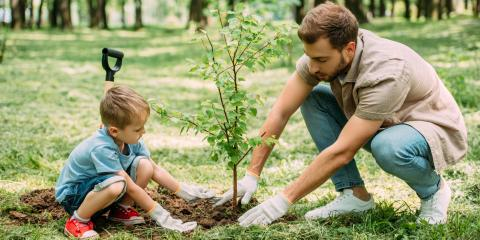 How to Care for Newly Planted Trees, Asheboro, North Carolina