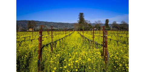 Three things to do in Calistoga at Lav & Fab, Calistoga, California