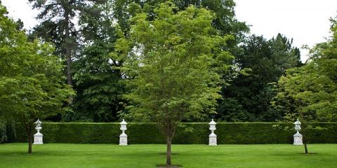 3 Benefits of Professional Tree Trimming Services, Loveland, Ohio