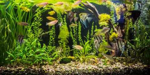 3 Tips for Storing Your Fish Tank, La Crosse, Wisconsin