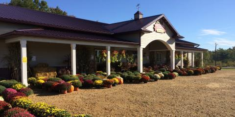 Labor Day Sale on Mums Hrs: 9 - 4, Byron, Wisconsin