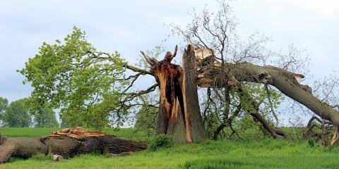 Tree Removal Experts Discuss 3 Dangers of Damaged Trees, Carter, Arkansas