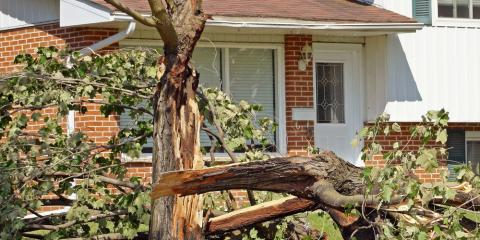 4 Smart Ways Protect Your Trees Against Storm Damage, North Huntingdon, Pennsylvania