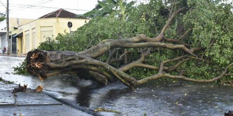 What Do You Need to Know About Storm-Damaged Trees?, North Royalton, Ohio
