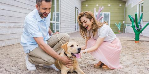 How to Have a Successful Dog Adoption, Stratford, Connecticut
