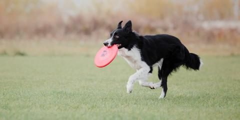 3 Keys to Keeping Your Pet Healthy, Stratford, Connecticut