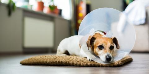 4 Ways to Help Your Pet Get Used to an Elizabethan Collar, Stratford, Connecticut