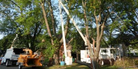 4 Questions To Ask While Searching for a Reputable & Affordable Tree Service , Stratford, Connecticut