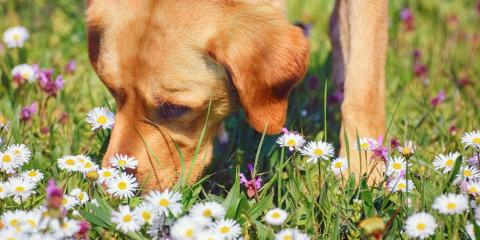 How to Keep Your Pet Safe This Spring, Stratford, Connecticut