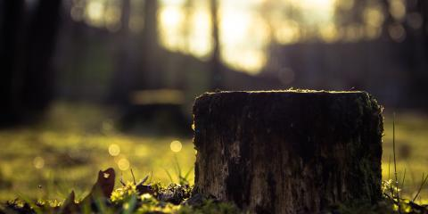 Why You Should Call a Professional for Stump Removal Services , Cincinnati, Ohio